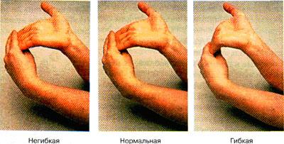 Посмотрите на свою руку и сравните длину фаланг8